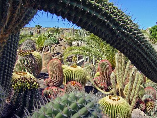 Kaktusgarten - Kakteenpark Cactualdea