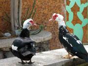 exotische Tiere - Kakteenpark Cactualdea