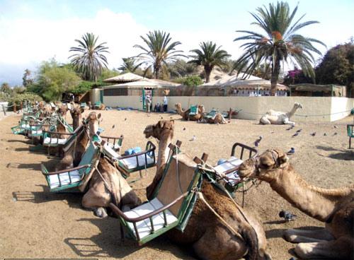 Kamelsafaris