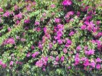 Blumen und Blüten auf Gran Canaria